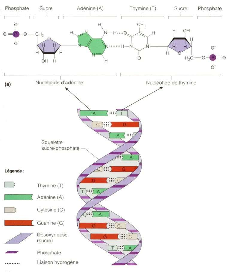تخزين البيانات في الحمض النووي